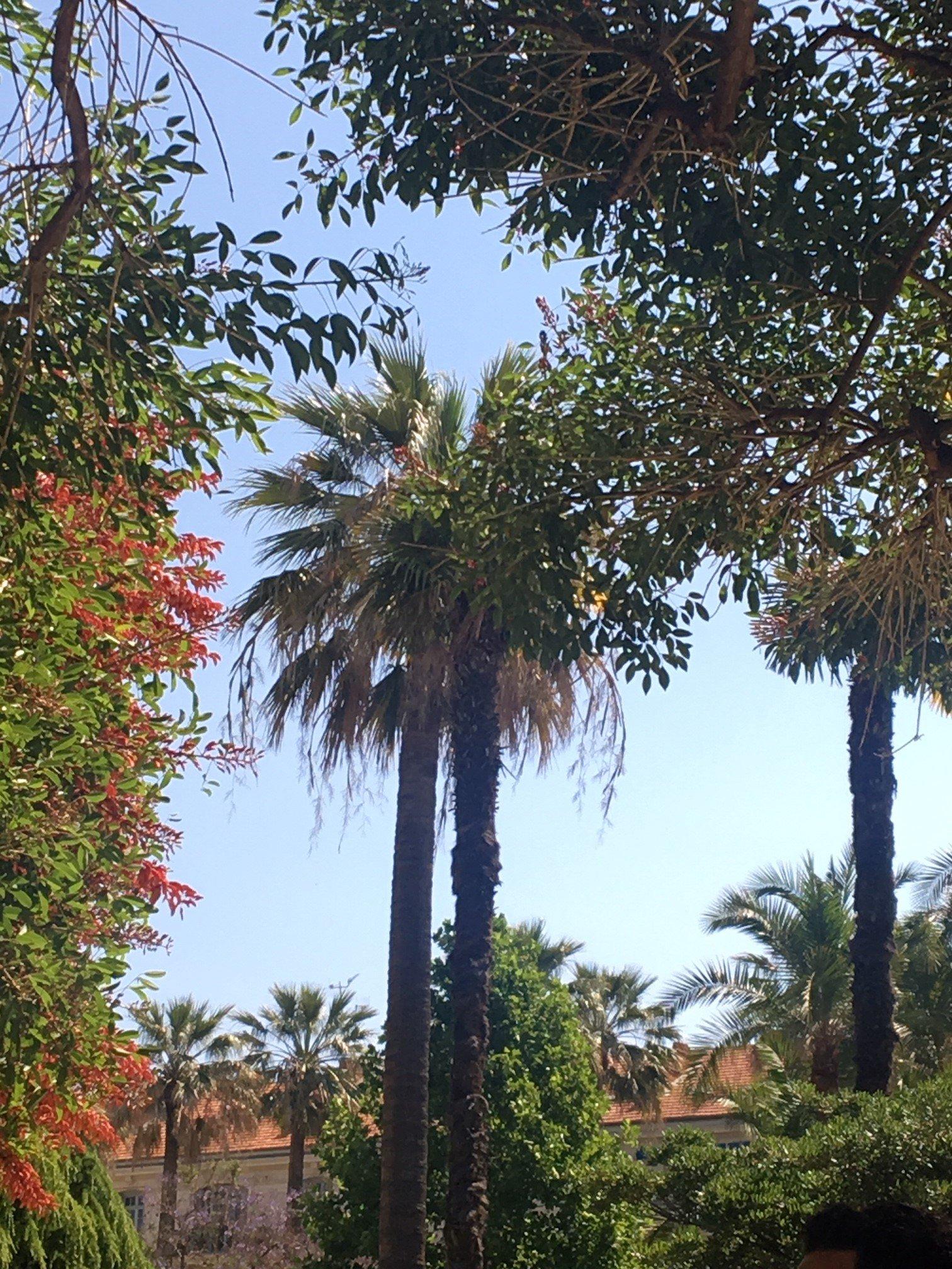 Jardin Alsace-Lorraine à Nice